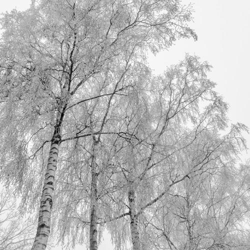 Tree Contrasts Jonas Hartz Photography Gütersloh Fotografie Bielefeld OWL