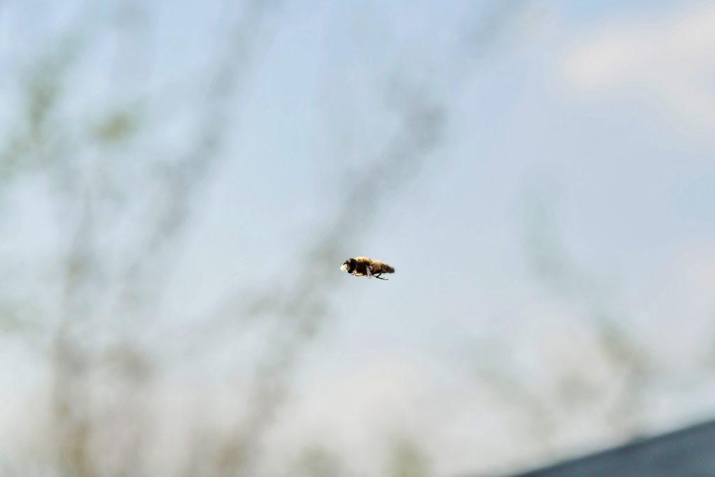 Bild-07-Makroaufnahme:-Action-Ein Insekt -im-Flug-Jonas-Hartz-Photography-Guetersloh-Fotografie-Insket-Makro