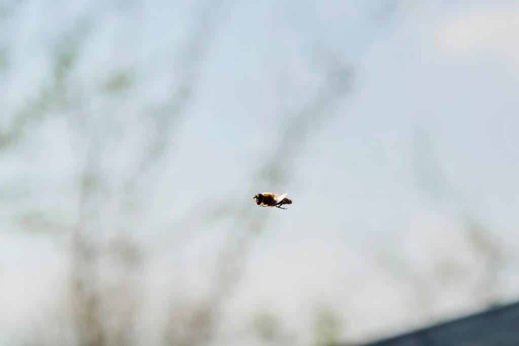 Bild-08-Makroaufnahme:-Action-Ein Insekt -im-Flug-Jonas-Hartz-Photography-Guetersloh-Fotografie-Insket-Makro