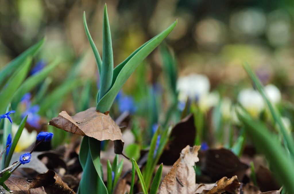 Botanischer Garten Gütersloh Makro Pflanzenfotografie 16 Jonas Hartz Photography