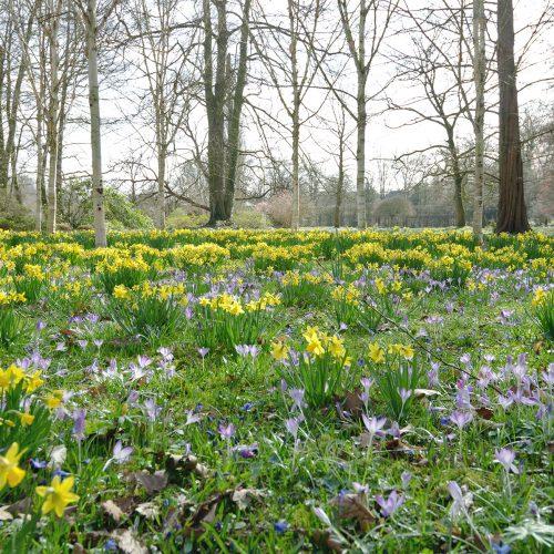 Botanischer Garten Gütersloh Pflanzenaufnahme 1 Jonas Hartz Photography
