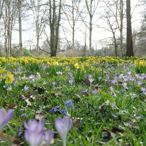 Botanischer Garten Gütersloh Pflanzenaufnahme 2 Jonas Hartz Photography